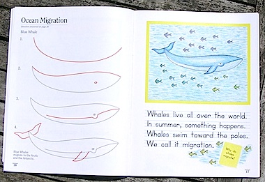 The lessons are simple and clean. This is how the swan lessons appears in Draw-Write-Now, Book 1. CLICK IMAGE TO ENLARGE