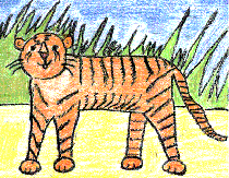 Draw Write Now, Tiger Lesson