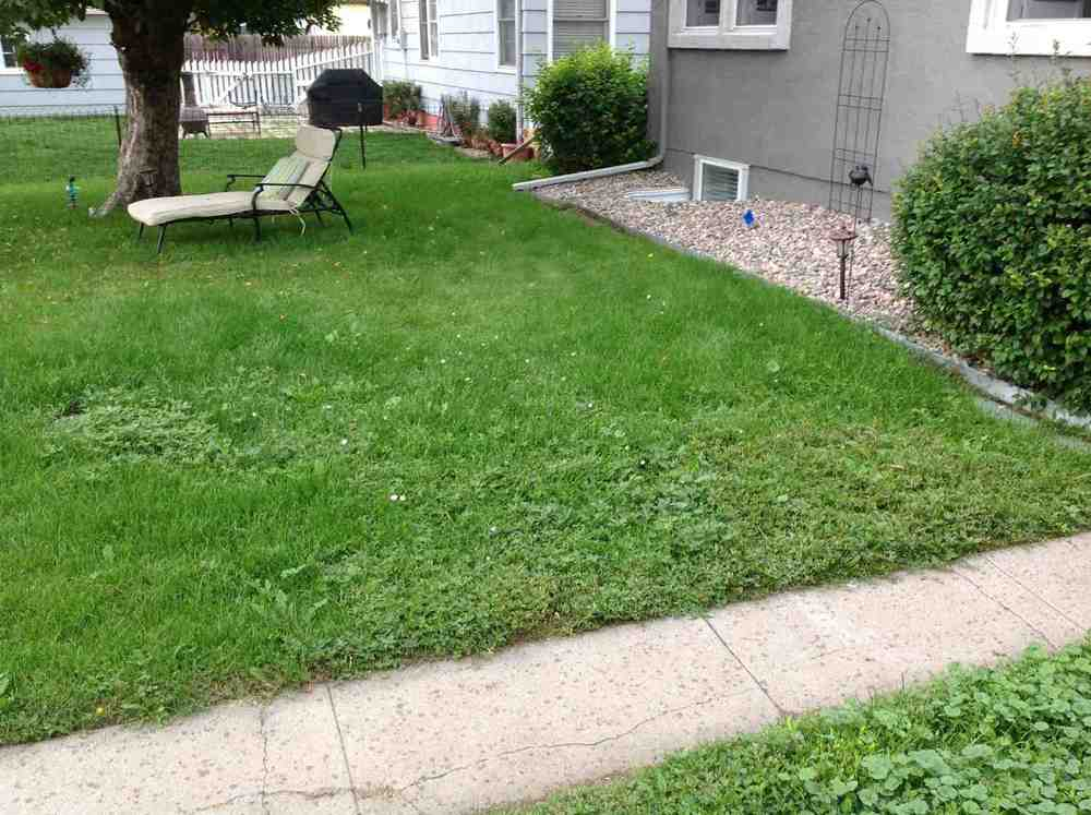Stamped Concrete backyard before 2.jpg