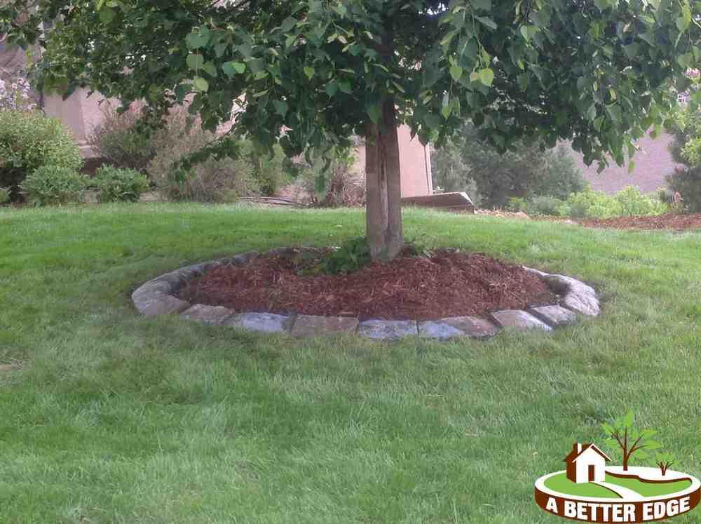 natural tree circle.jpg