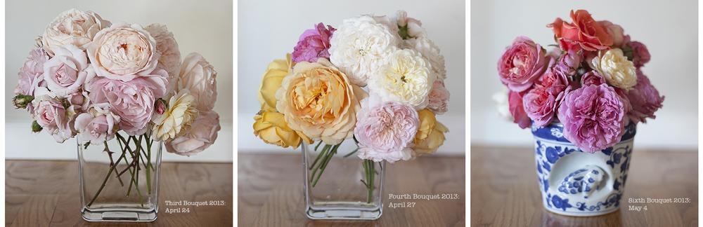 spring rose trio.jpg