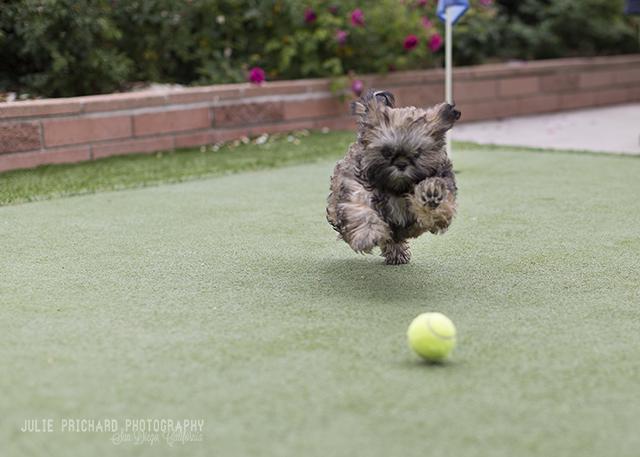 Chewie - Age 4 months.