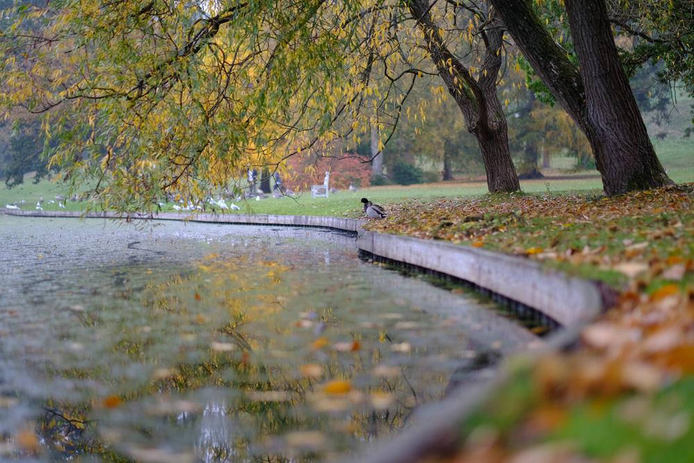 Fall Foliage reflected in lake - Fuji X-T2 Fuji Velvia Film Simulation
