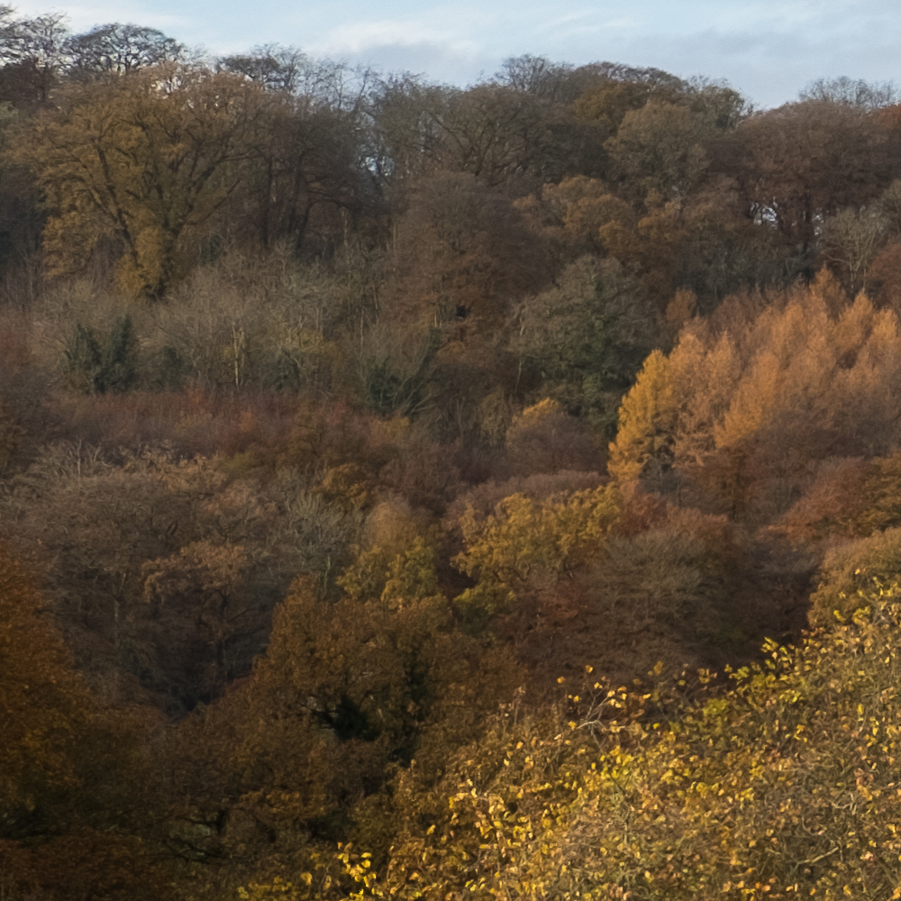Fuji X-T2 - Macphun Luminar Foliage Example - JPG Export from RAW with minimal edits
