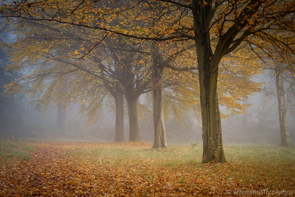 Fuji X-T1 - Fall Leaves, Nonsuch Park, UK