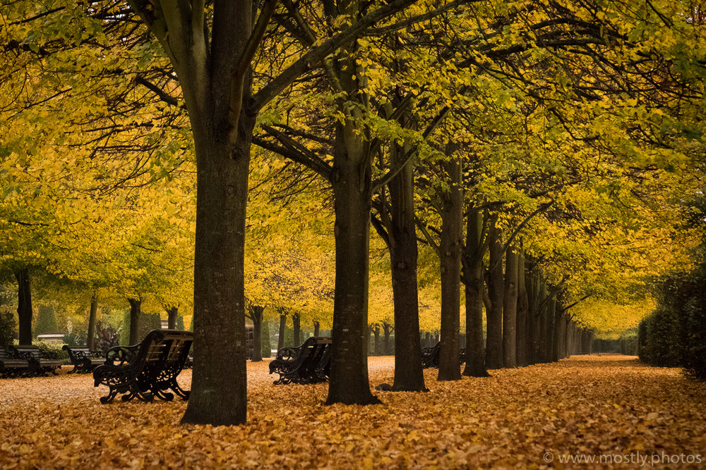 Fuji X-T2 - Fall Leaves on the ground in Londons Regents Park