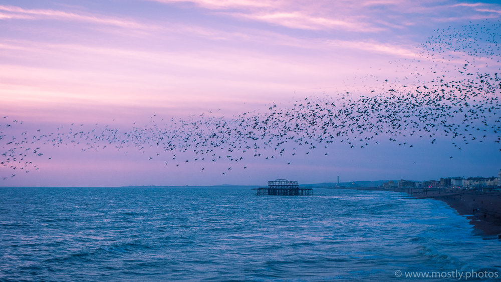 Starling Murmuration in Brighton, UK