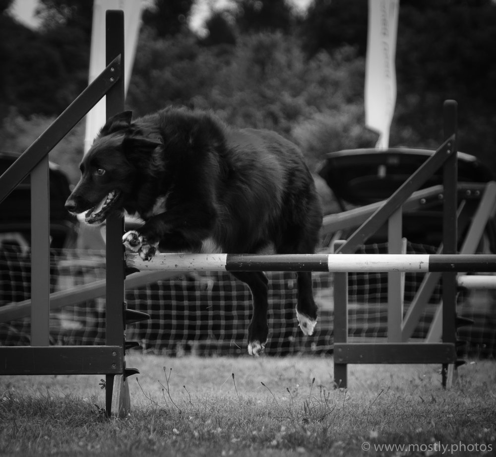 Fuji X-T2 and Fuji 18-135mm Autofocus Test Dog Agility Show