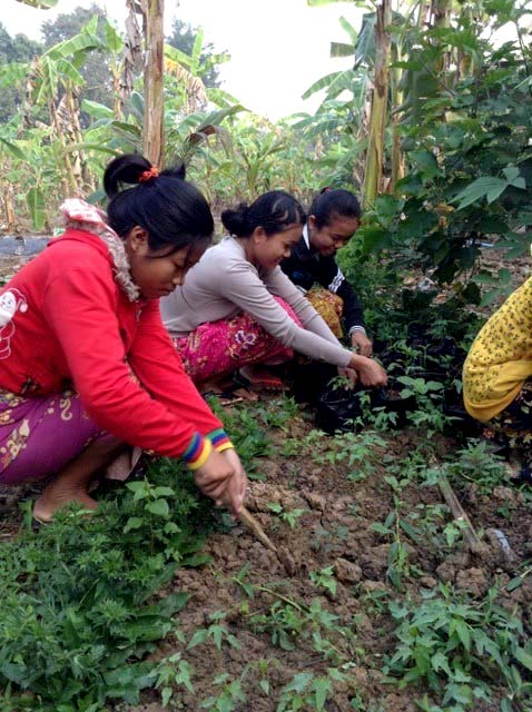 Planting and harvesting in Battambang 1's home garden.
