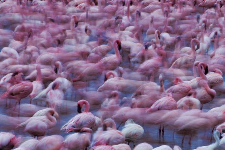 flamingomigration003.jpg