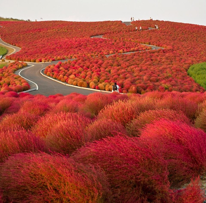 Hitachi Seaside Park in Japan