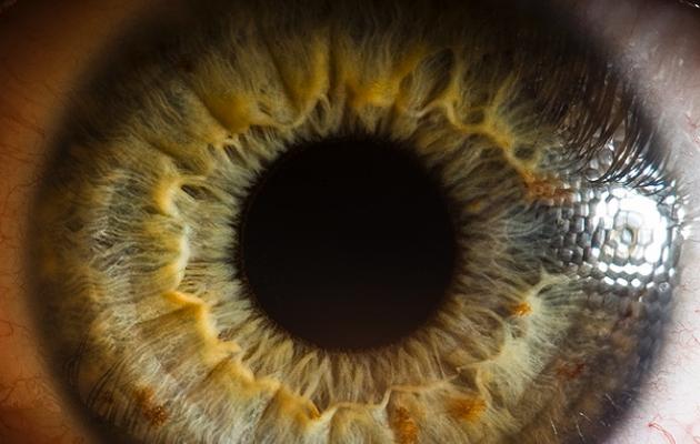 Macro-Eyes-FEELDESAIN--630x400.png