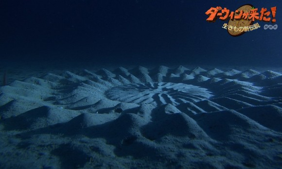 underwater-mystery-circle-11-580x348.jpeg
