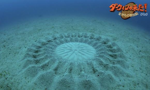 underwater-mystery-circle-10-580x348.jpeg
