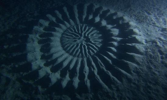underwater-mystery-circle-6.jpeg