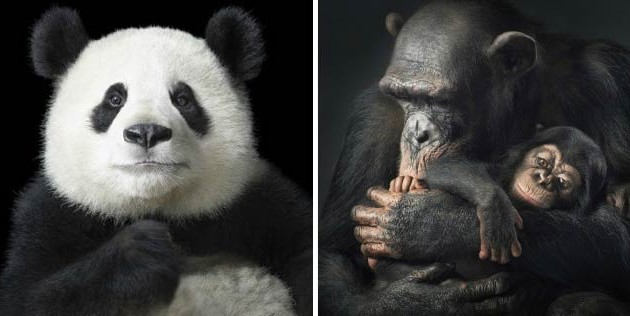 MORE-THAN-HUMAN-_-Tim-Flach-630x316.jpeg