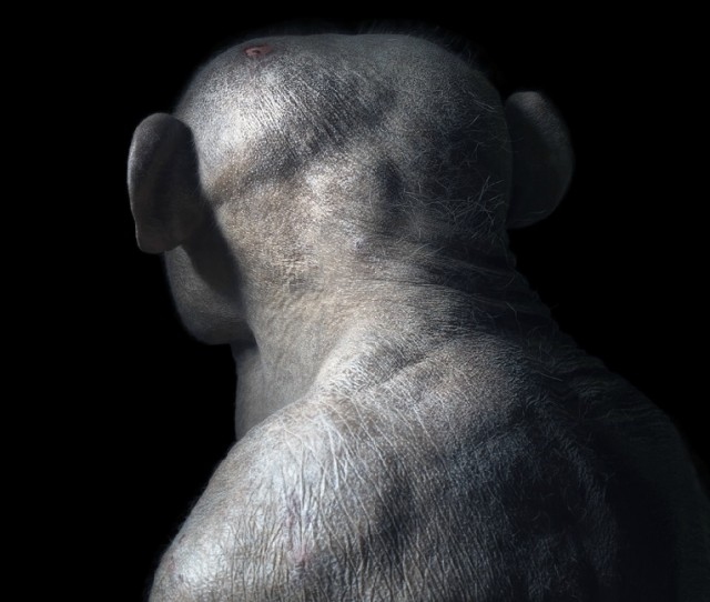 More-Than-Human31-640x542.jpeg