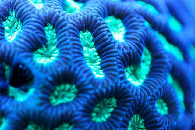 coral-5.jpg