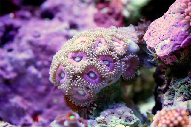 coral-7.jpg