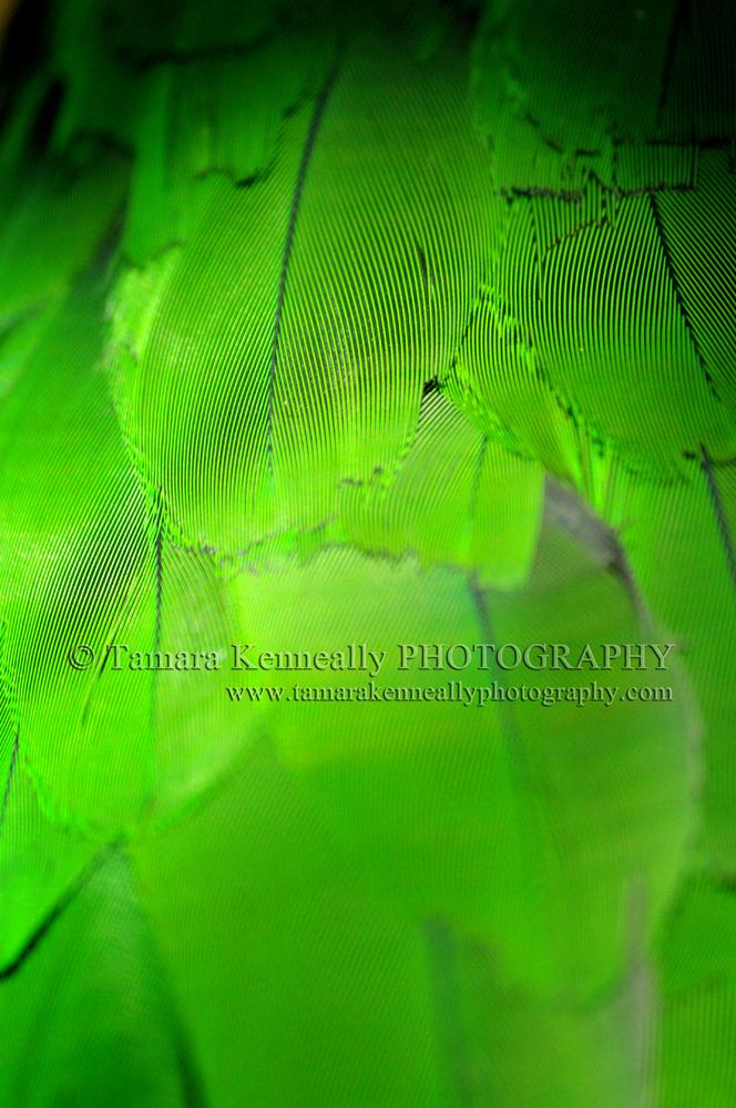 GreenFeathersWEB.jpg