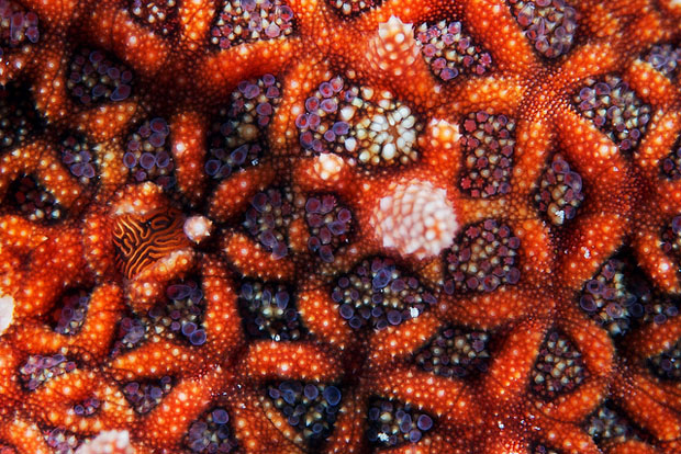 starfishmacro-9.jpg