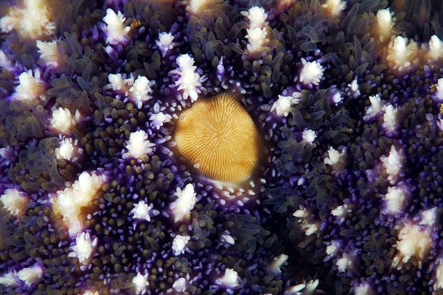 starfishmacro-3.jpg