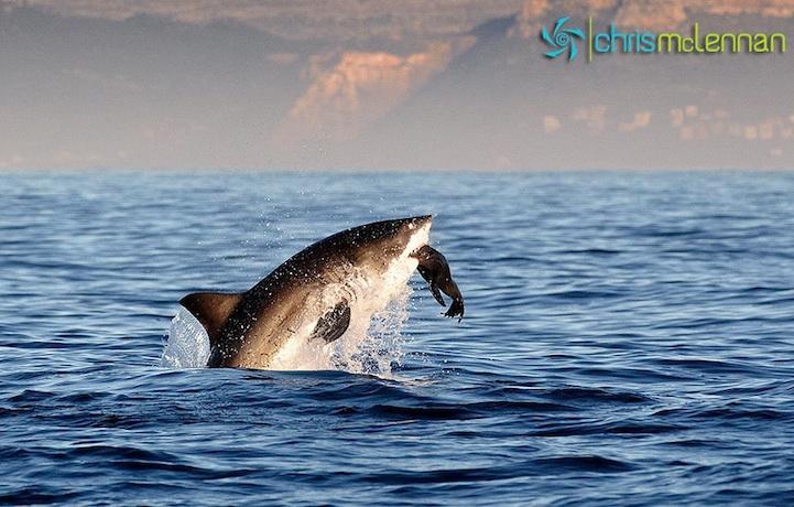 shark5.jpg
