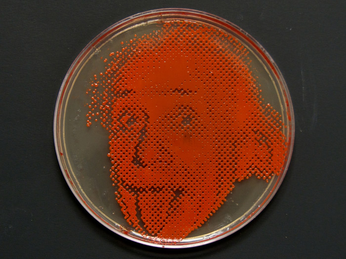 small-einstein-plate.jpg