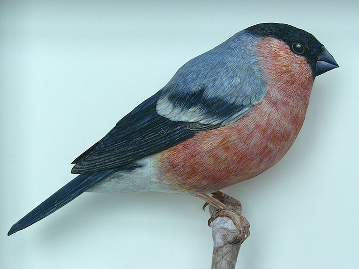 papercraftbirds03.jpg
