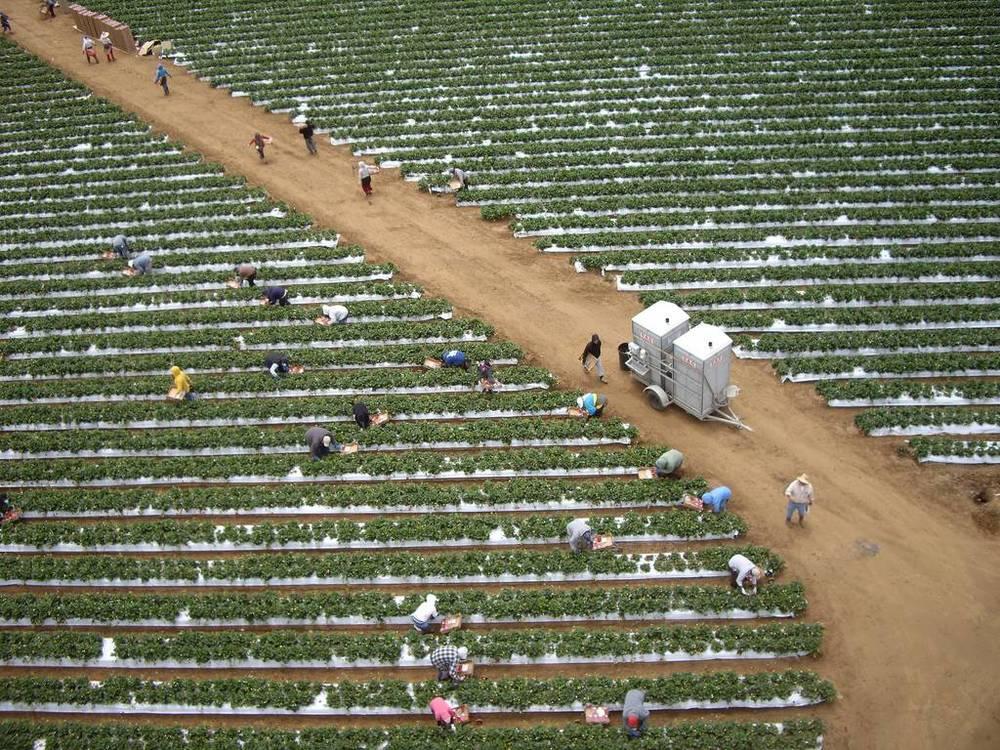KAP Kite Aerial Photography watsonville california.jpg
