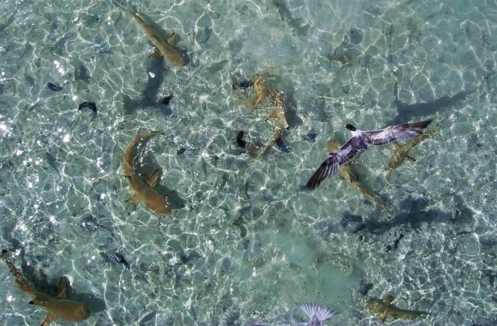 KAP Kite Aerial Photography blue lagoon.jpg