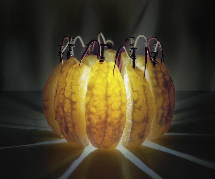 عکس1:اخبار علم فناوری آموزش در علمها-تولید برق از میوه و خلق آثار هنری