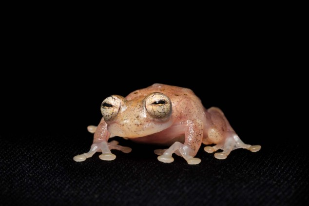 Frog-Portraits-by-Peter-Lipton-11-634x422.jpg