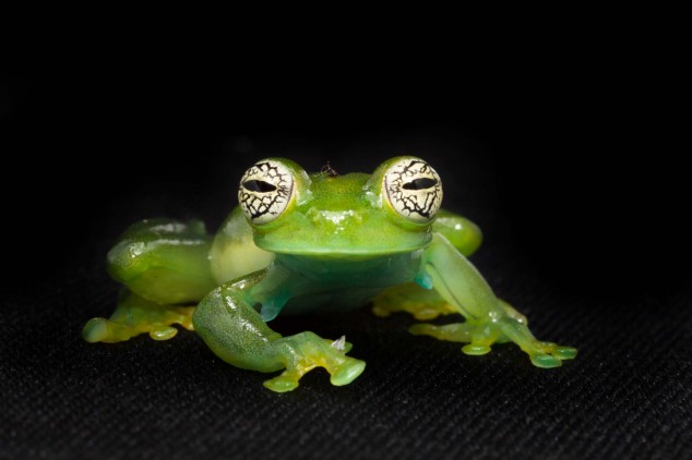 Frog-Portraits-by-Peter-Lipton-12-634x422.jpg