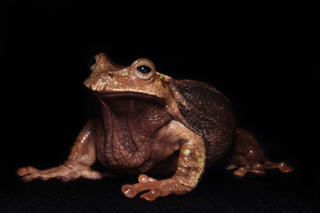 Frog-Portraits-by-Peter-Lipton-01-634x422.jpg