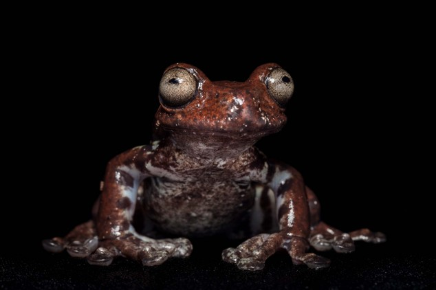 Frog-Portraits-by-Peter-Lipton-02-634x422.jpg