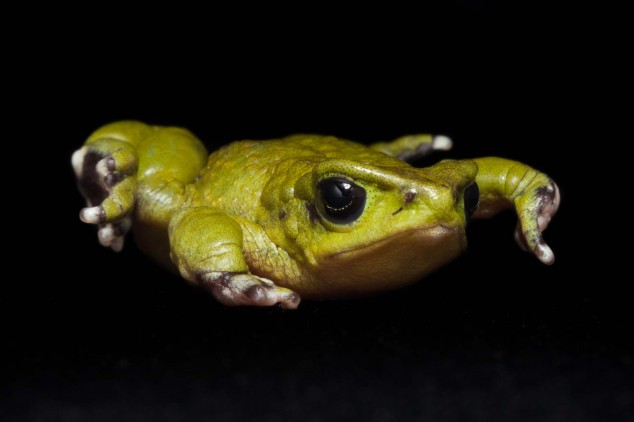 Frog-Portraits-by-Peter-Lipton-03-634x422.jpg