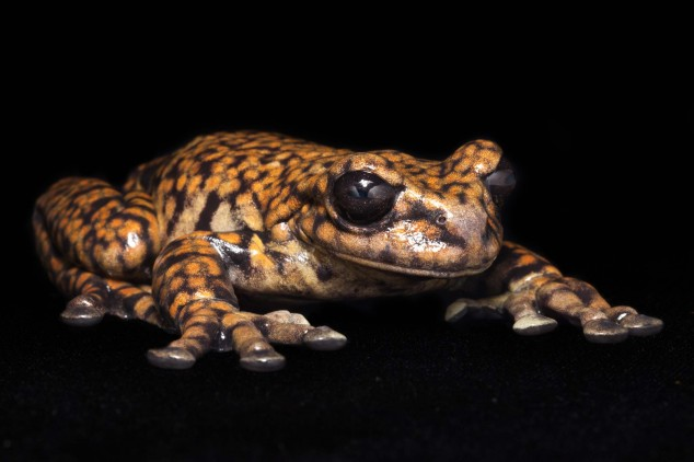 Frog-Portraits-by-Peter-Lipton-05-634x422.jpg