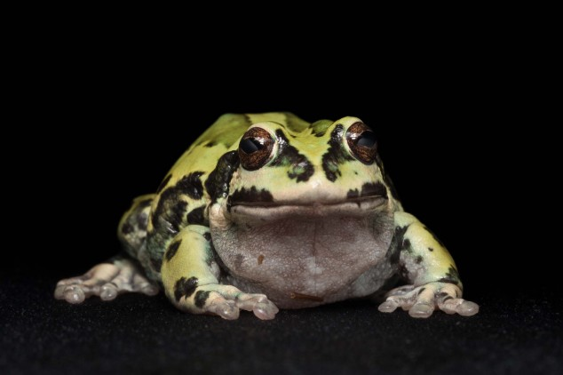 Frog-Portraits-by-Peter-Lipton-06-634x422.jpg