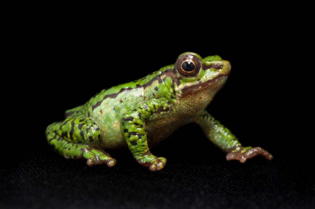 Frog-Portraits-by-Peter-Lipton-07-634x422.jpg