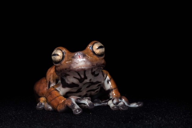 Frog-Portraits-by-Peter-Lipton-08-634x422.jpg