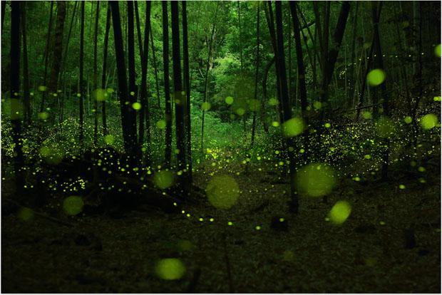 yumefireflies-4.jpg