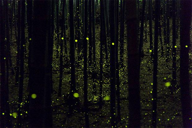 yumefireflies-5.jpg