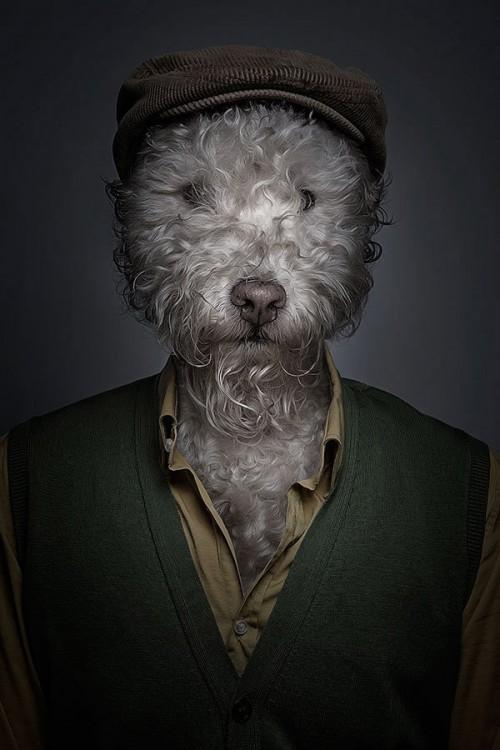 half-human-half-dog-portraits-sebastian-magnani-1-500x750.jpg