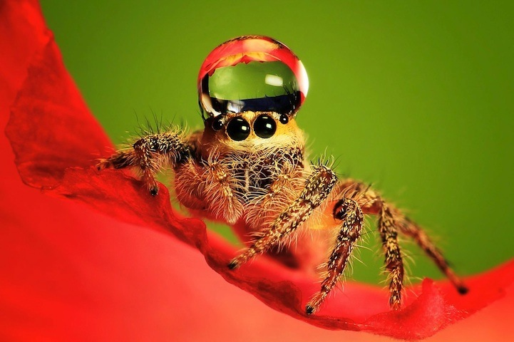 spiderswaterdrops01.jpg