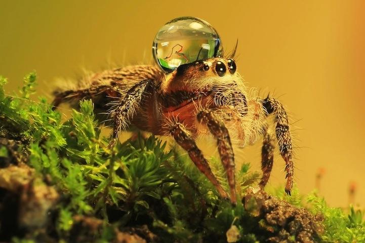 spiderswaterdrops06.jpg