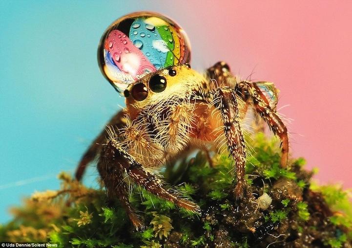 spiderswaterdrops07.jpg