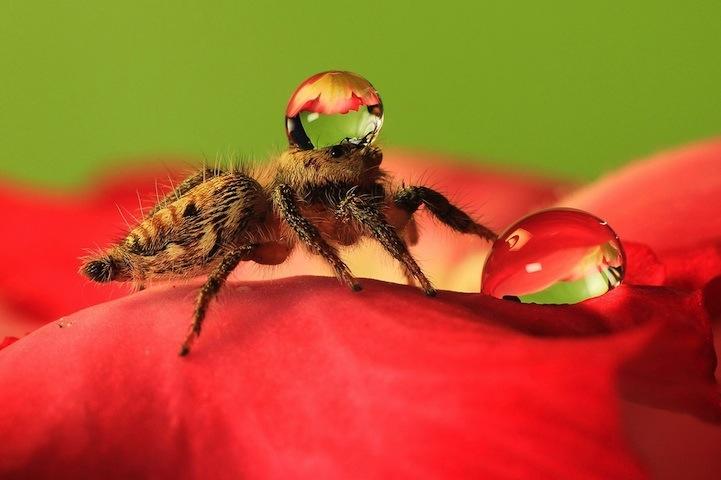 spiderswaterdrops04.jpg