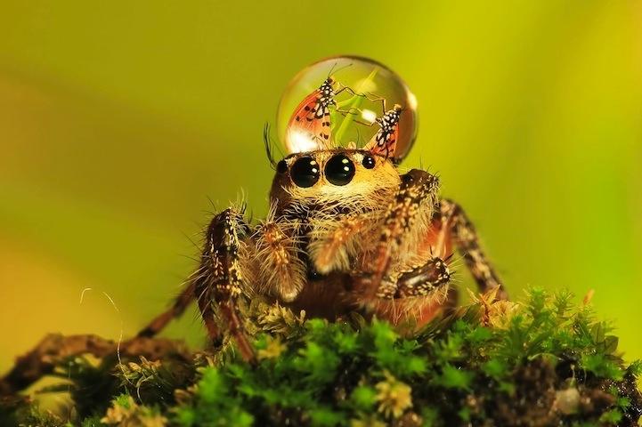spiderswaterdrops03.jpg