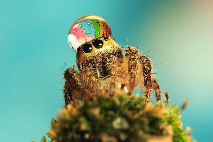 spiderswaterdrops02.jpg